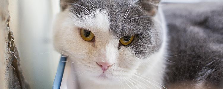 猫咪滴虫会自愈吗 感染寄生虫怎么会自愈?