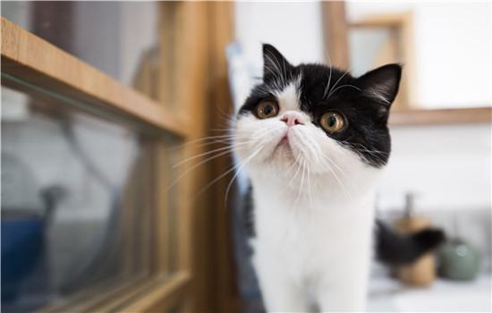 猫感冒打喷嚏吃什么药 要区别感冒和猫鼻支哦!-轻博客