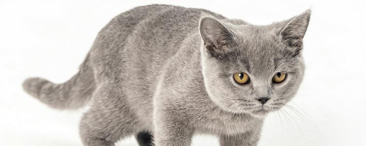 猫打到尿失禁 教育猫咪千万不要用体罚!