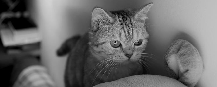 猫咪不舒服的睡姿 要注意观察猫咪食欲哦