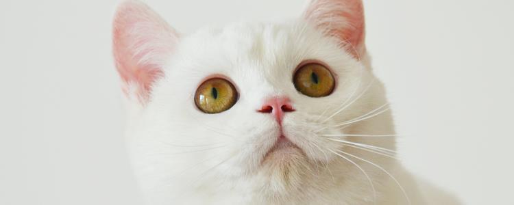 猫生下刚成型的死胎