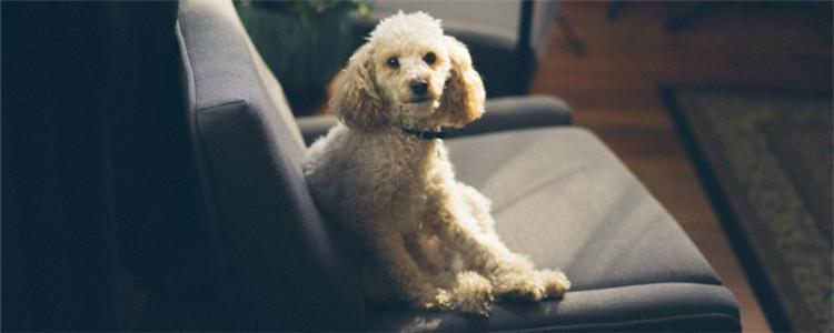 狗狗腿关节处断了怎么治 没有金刚钻就别揽瓷器活