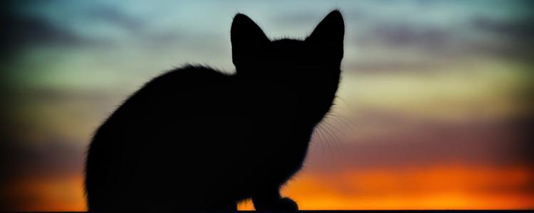 猫咪吃了鸡骨头死了 说了多少遍不要喂骨头还不听