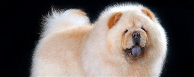 为什么狗舌头黑 什么品种的狗舌头是黑色的