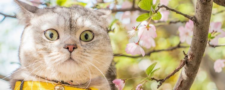猫癣什么途径传染给人