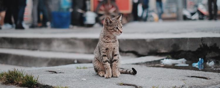 被野猫抓伤会怎么样 会不会得狂犬病?
