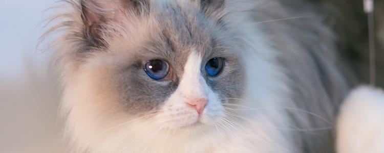 猫可以不喝水吗 猫缺水会有严重的后果!