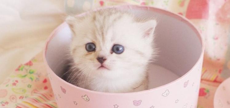 猫毛会让人过敏吗 不要误会猫咪啦!