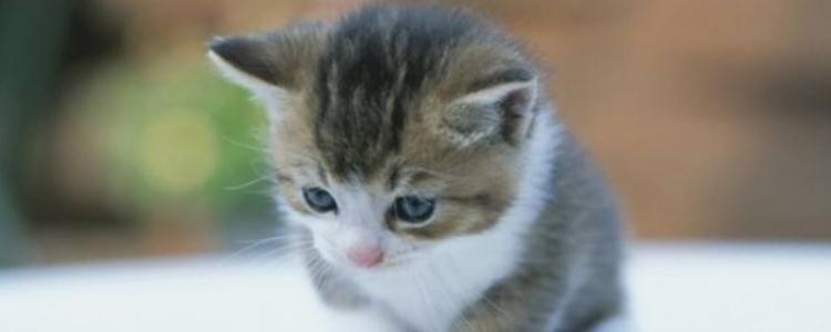 去猫咖被猫咬了怎么办 如何正确处理伤口