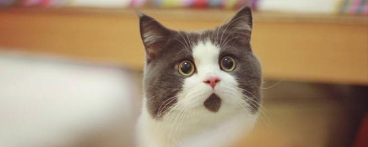 被猫咖的猫咬出血了 需要打疫苗吗?