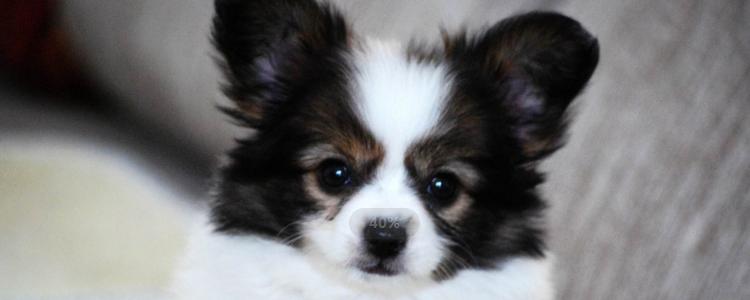 怎么治疗狗的胰腺炎 针对性治疗才是关键!