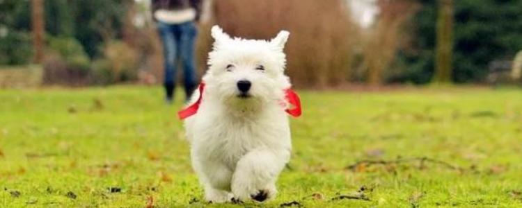 狗胰腺炎怎么得的 不让狗狗得病,就多注意一下吧