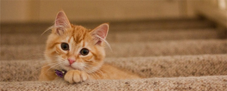 猫外出包有必要买吗 猫外出包的弊端有哪些