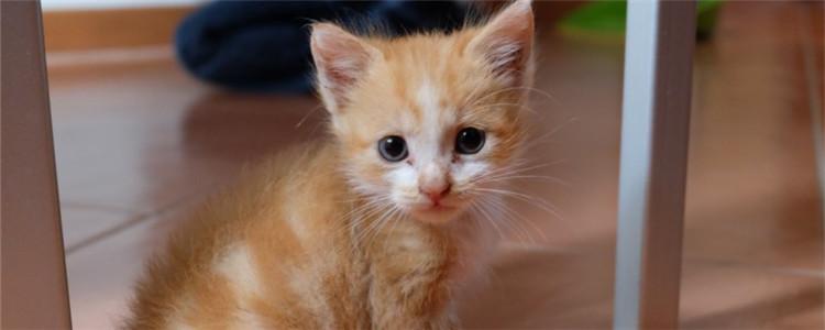 猫用什么猫砂比较好 这三种猫砂都各有优点