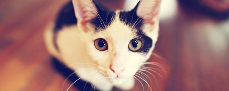 被猫咖的猫抓了有事吗 需要打针吗?