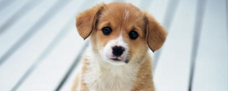 狗得糖尿病晚期死前症状 这些症状的时候主人就需要注意了-轻博客