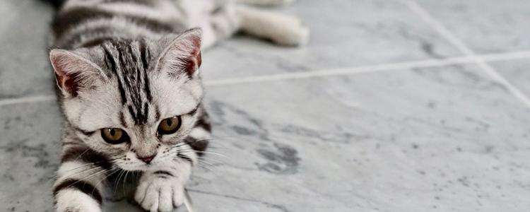 被流浪猫咬了出血了怎么办 需要打针吗?