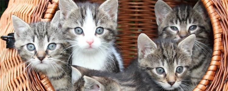 幼猫的狂犬病的几率 狂犬病不能遗传也不能母婴传达插图(1)