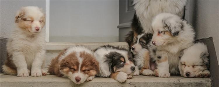狗隔几个月又可以怀孕 狗的妊娠期一般是多久
