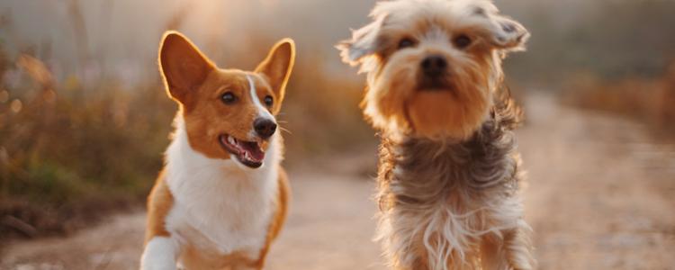 狗咬了没有破就有点疼 应该如何处理可避免感染?