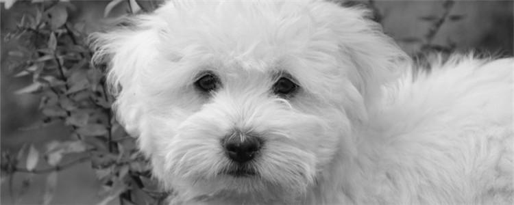 狗鼻子烂了是什么病 狗鼻子烂了要注意什么