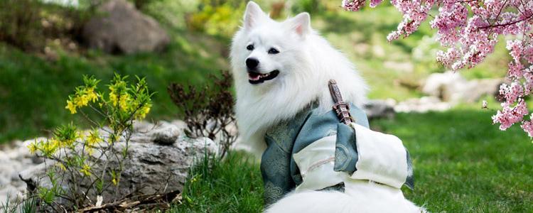 狗狗多大可以配种 如何计算狗狗配种最佳时间-轻博客