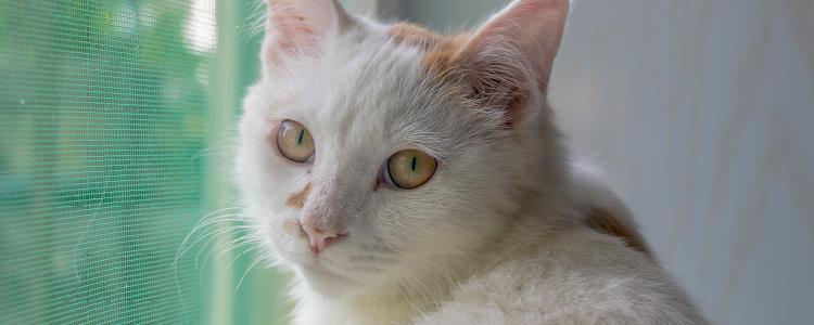 猫总是抓破纱窗怎么办 主人一定要及时干预哦!