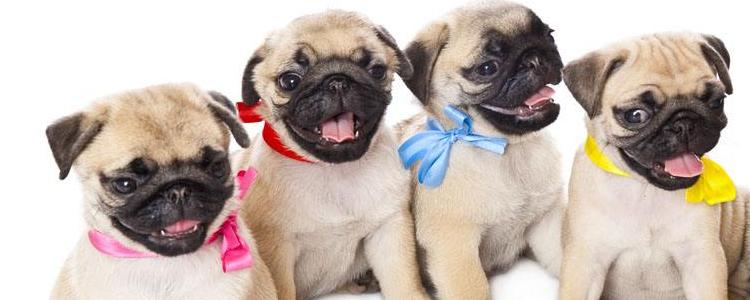 狗狗打完疫苗的注意事项 这四大点你一定要知道!