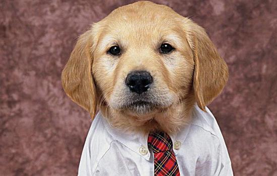 狗狗驱虫多久一次 注意区分体内和体外哦!-轻博客