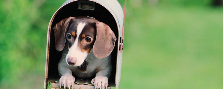 狗狗蠕型螨虫怎么治疗 用什么药?