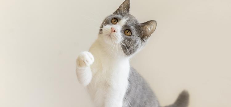 猫在家会觉得无聊吗 子非猫,安知猫无聊不无聊