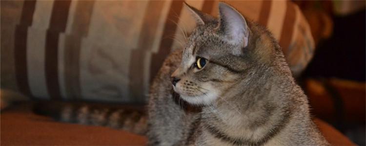 猫下巴肿了 导致猫咪下巴种的因素有哪些