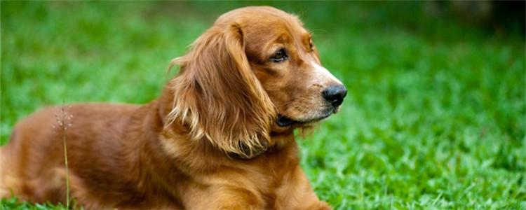 狗狗祈祷姿势有几种病 狗狗是真的在做祈祷吗