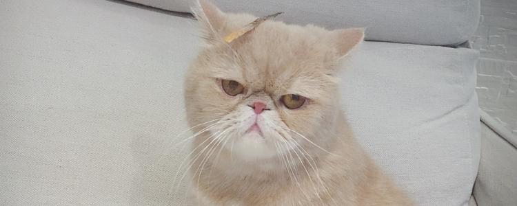 如何判断加菲猫鼻支 和感冒症状如何区分?-轻博客
