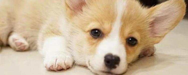 狗狗拉稀是什么原因? 一篇文章讲透狗狗拉稀!