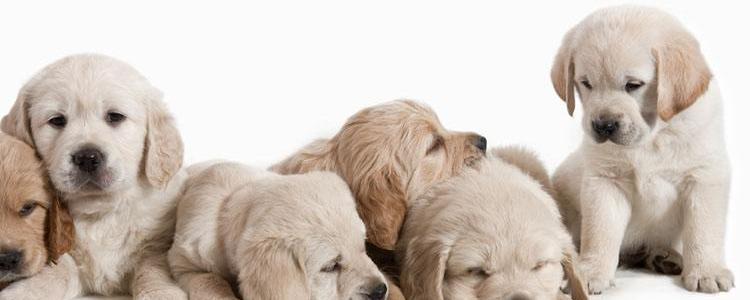 狗狗拉稀很臭,精神好是怎么回事?