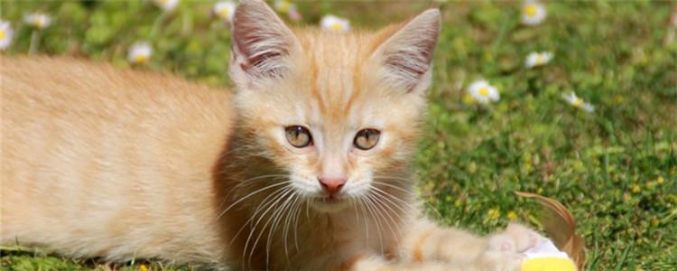 福摩猫粮不同口味对比 福摩猫粮哪个味道的比较好呢?