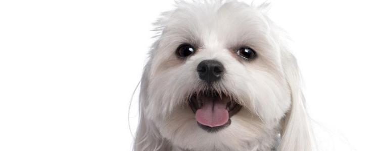 狗狗呕吐是什么原因引起的 这几个原因要当心哦!