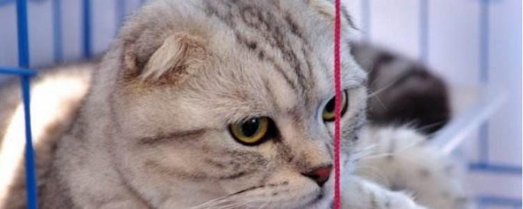 什么原因会引起猫咪肝脏问题 这些问题都是需要注意的