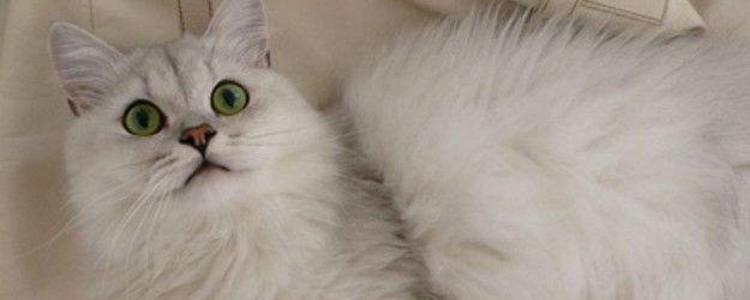 猫咪嘴上长肉芽怎么办 改善问题的基本是饮食!