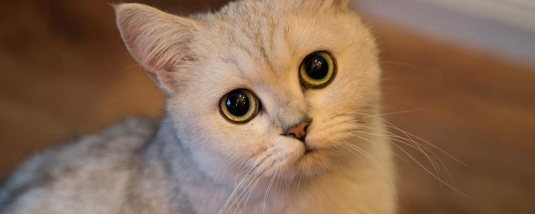 猫突然用劲儿频繁的舔毛 别担心哦!