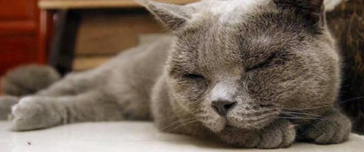猫咪睡觉打鼾声音特别大 可能是鼻腔疾病!