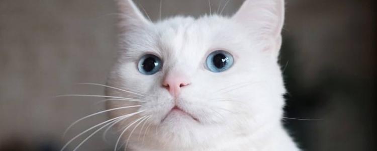 猫咪流口水怎么办 多涎症如何治疗?