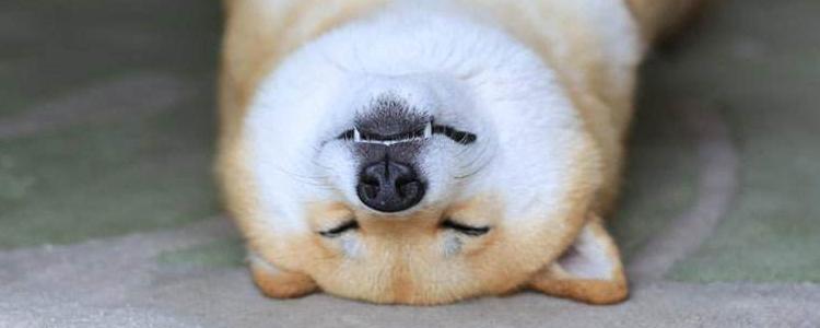 狗狗蛋白质缺乏症的症状 还不赶紧给你家狗狗补一补