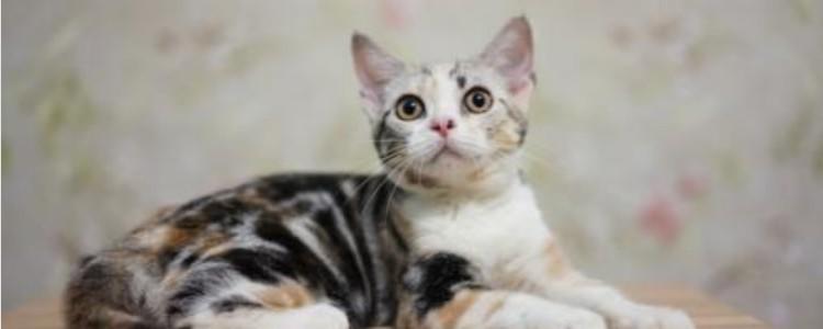 猫咪呜呜叫是什么意思 意思绝对不止是一种!