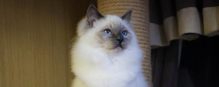猫咪如何消除毛球 选择猫咪喜欢的方法就行了!