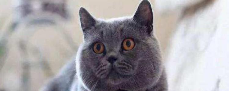 如何鉴别猫咪胖瘦 三种方法哪种都很实用!