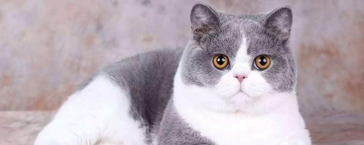 猫咪吐舌头原因 是不是看起来很可爱?