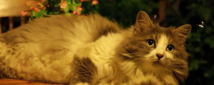 猫咪难产会死吗 不及时解决会失去很多条生命的!