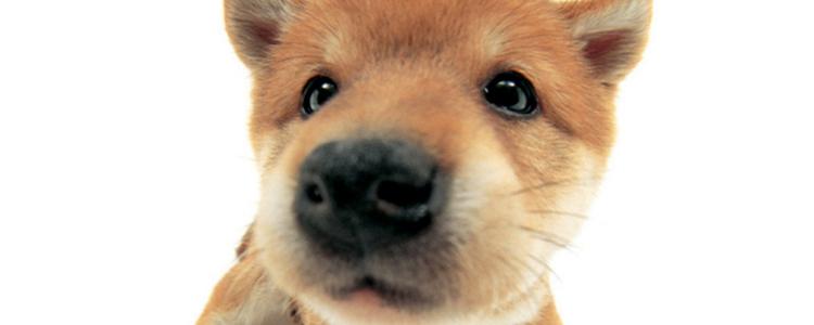 狗狗鼻子发热怎么回事? 是不是生病了?